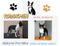 rodokmen-web-caprice.jpg